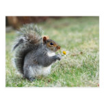 smiling squirrel with daisy postcard