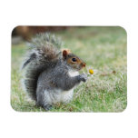 Smiling Squirrel with Daisy Rectangular Photo Magnet