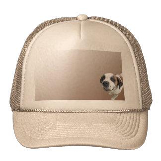 Smiling St Bernard on Brown Trucker Hat