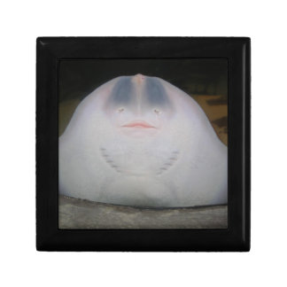 Smiling Sting Ray Swimming in Water Gift Box