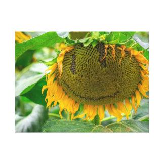 Smiling Sunflower Canvas Print