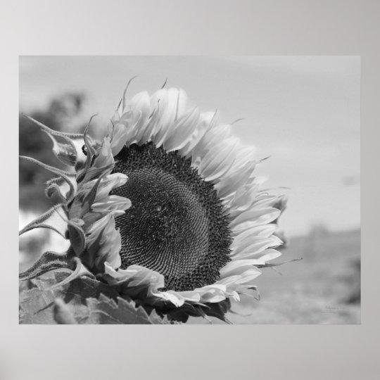 Smiling Sunflower Floral Black White Print