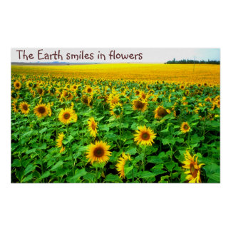 Smiling sunflowers  by TDGallery Poster