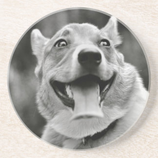 Smiling Welsh Corgi Coaster