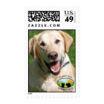 Smiling Yellow Lab Stamps