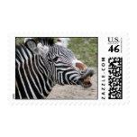 Smiling Zebra Postage Stamp