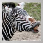 Smiling Zebra Poster