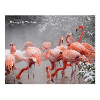 Smithsonian | Flamingos In The Snow Postcard