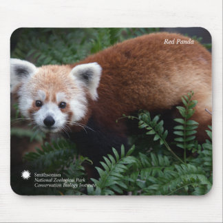 Smithsonian | Red Panda Mouse Pad