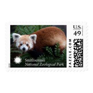 Smithsonian | Red Panda Postage