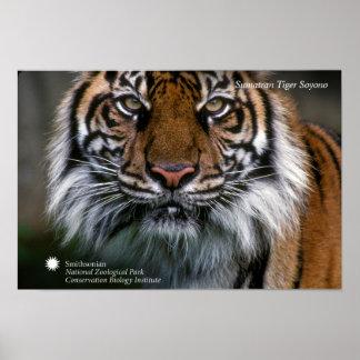 Smithsonian | Sumatran Tiger Soyono Poster