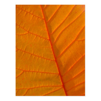 Smoke Tree Leaf Postcard