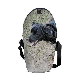 ¡Smokey espera para ir para un paseo! Bolsa Messenger