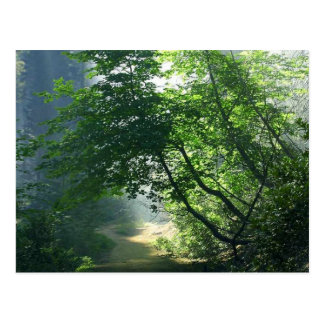 Smokey Paths Trails Forests Woods Postcard