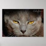 Smokey the Cat poster