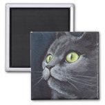 Smokey viejo - imán gris del gato