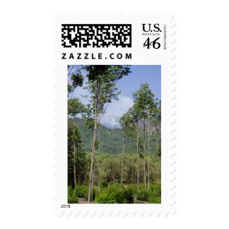 Smoking Mt Etna Through the Trees Stamps