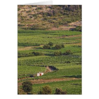Smokvica vineyards on Korcula from the Toreta Greeting Card