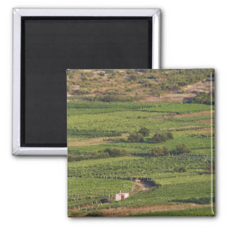 Smokvica vineyards on Korcula from the Toreta 2 Inch Square Magnet