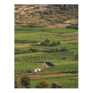 Smokvica vineyards on Korcula from the Toreta Postcard