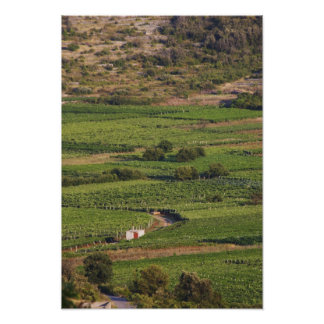 Smokvica vineyards on Korcula from the Toreta Poster