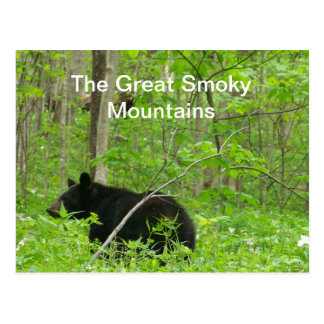 Smoky Bear Postcard