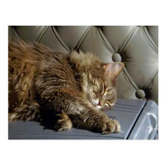 Smoochie Girl Kitty (#1) Postcard