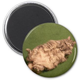 Smoochie Girl's Daily Kitty Yoga 2 Inch Round Magnet