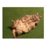 Smoochie Girl's Daily Kitty Yoga Postcard