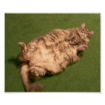Smoochie Girl's Daily Kitty Yoga Poster
