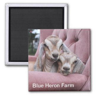 Smooshie Baby Goat Magnet