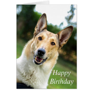 Smooth Collie dog beautiful custom birthday card