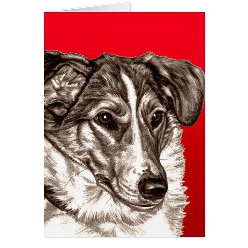 Smooth Collie Portrait Card