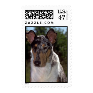 Smooth Collie Postage Stamp