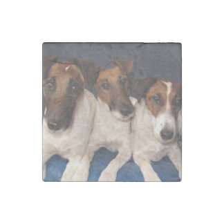 smooth fox terrier group stone magnet