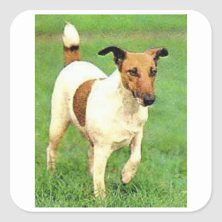Smooth Fox Terrier Square Sticker