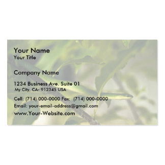 Smooth Green Snake Business Card
