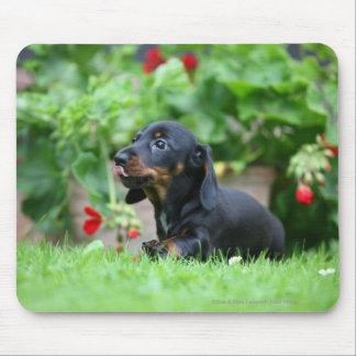 Smooth-haired Miniature Dachshund 1 Mouse Pad