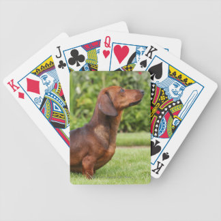 Smooth-haired Miniature Dachshund Bicycle Playing Cards