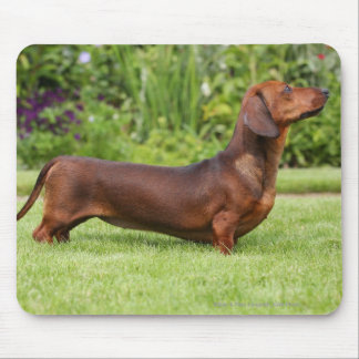 Smooth-haired Miniature Dachshund Mouse Pad