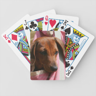Smooth-haired Miniature Dachshund Puppy Bicycle Playing Cards