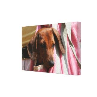 Smooth-haired Miniature Dachshund Puppy Canvas Print