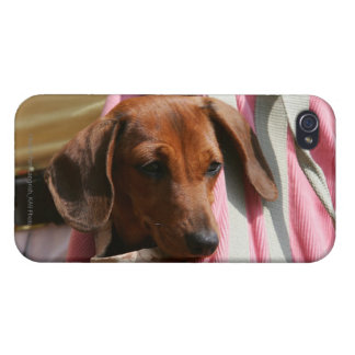 Smooth-haired Miniature Dachshund Puppy Case For iPhone 4