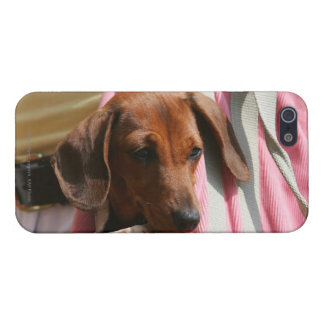 Smooth-haired Miniature Dachshund Puppy Case For iPhone SE/5/5s