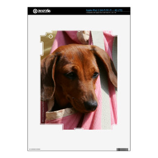 Smooth-haired Miniature Dachshund Puppy iPad 3 Decal