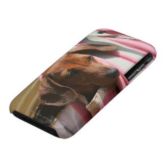 Smooth-haired Miniature Dachshund Puppy iPhone 3 Case-Mate Case