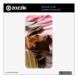Smooth-haired Miniature Dachshund Puppy iPhone 4S Decal