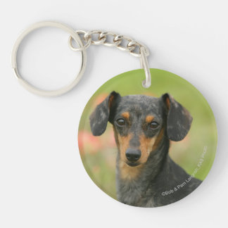 Smooth-haired Miniature Dachshund Puppy Looking at Double-Sided Round Acrylic Keychain