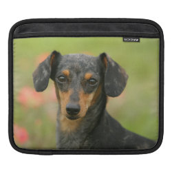 iPad Sleeve with Dachshund Phone Cases design