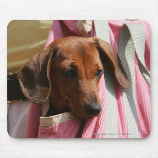 Smooth-haired Miniature Dachshund Puppy Mouse Pad